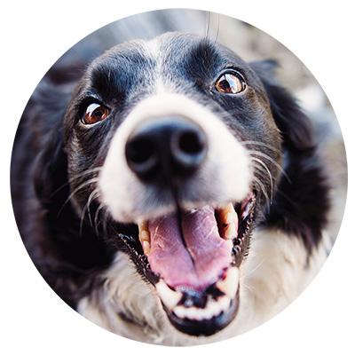 DOG FIT by PreThis für die Sehkraft und die Augen von Hunden