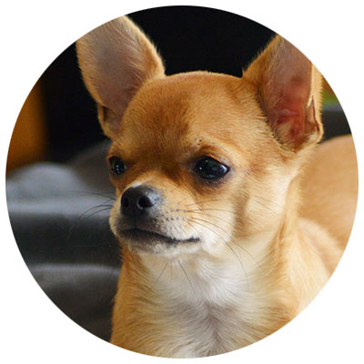 Hund Kollagen fuer die Gelenke Knorpel