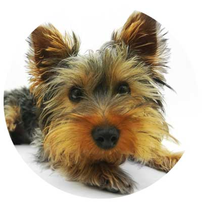 Hund Verdauung und Magen Darm Tarkt