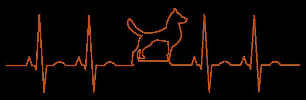 Hund Nervensystem