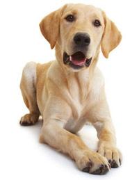 DOG FIT by PreThis Vitamin B-Komplex für Hunde