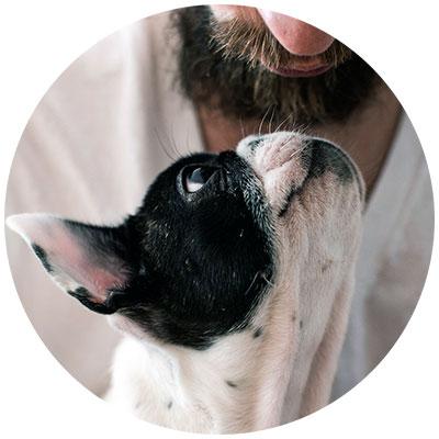 Hund Mundgeruch