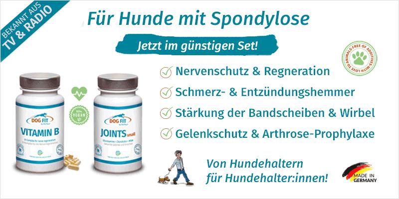 Spondylose