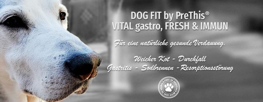 Hund Magen Darm und Verdauung