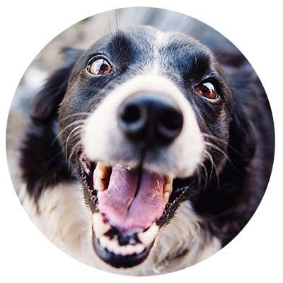 Hund mit Mundgeruch