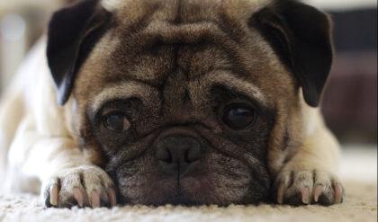 hund inkontinenz