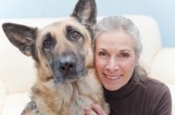 Immunschutz für den Hund