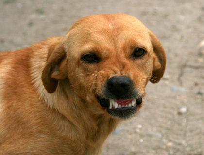 Hund Angstbeisser