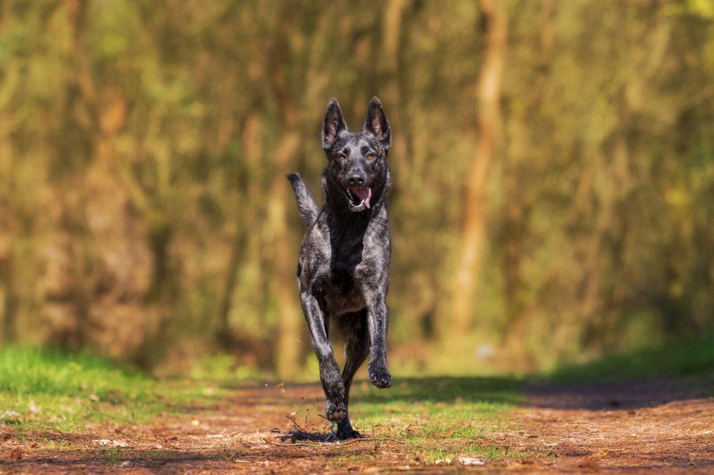 Hund mit gesunden Gelenken