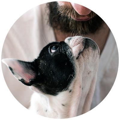Hund Mundgeruch und Zahnfleischentzündung