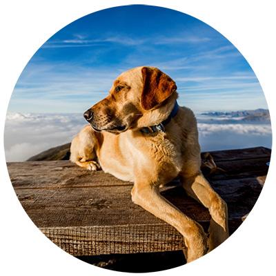 Vitamin B Für das Nervensystem von Hunden