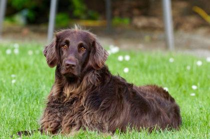 Hund mit gesundem Fell