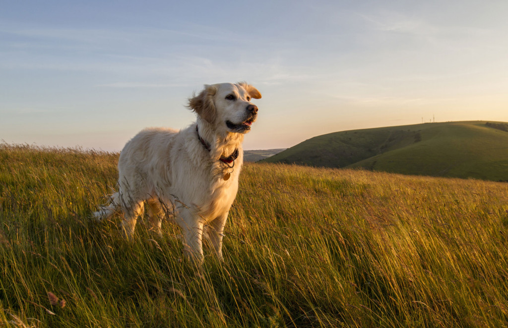 Hund Spondylose