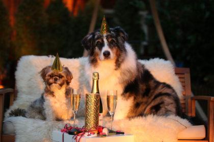 Hunde an Silvester
