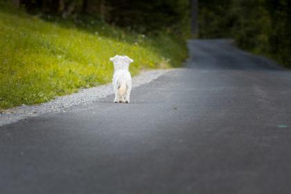hund-demenz