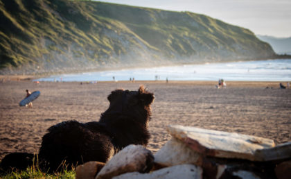 Hund Strand Urlaub