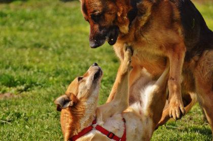 Hund Unterwerfung