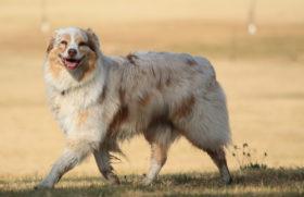 ein laechelnder Hund