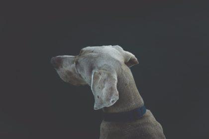 Hund-Dunkelheit