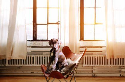hund-erziehung
