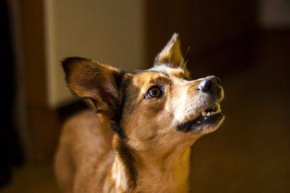 hund-schlau