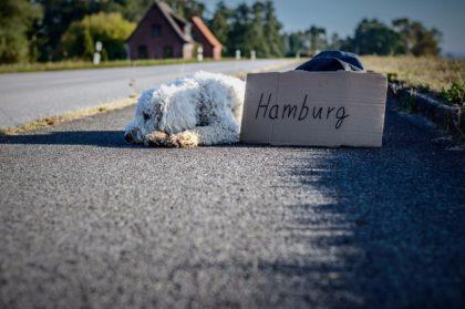 hund-streuner