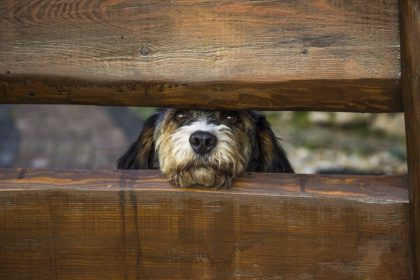 hund-gartenzaun