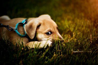 hund-leine