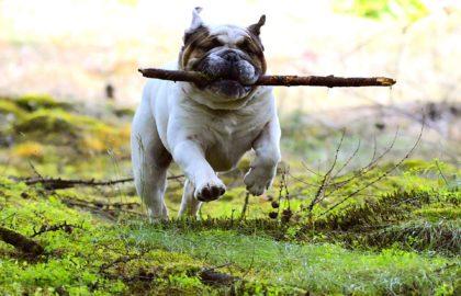 hund-regeln