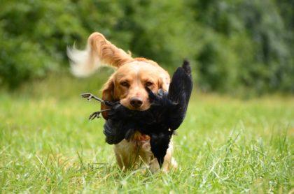 Hund-Jagdtrieb