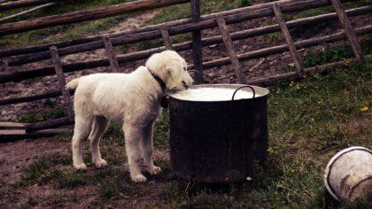 Hund-futter