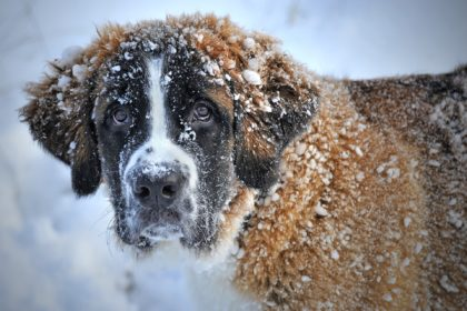 hund-winter