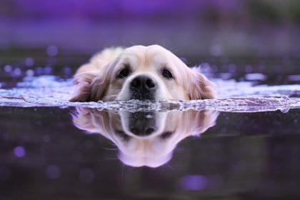 hund-schwimmen