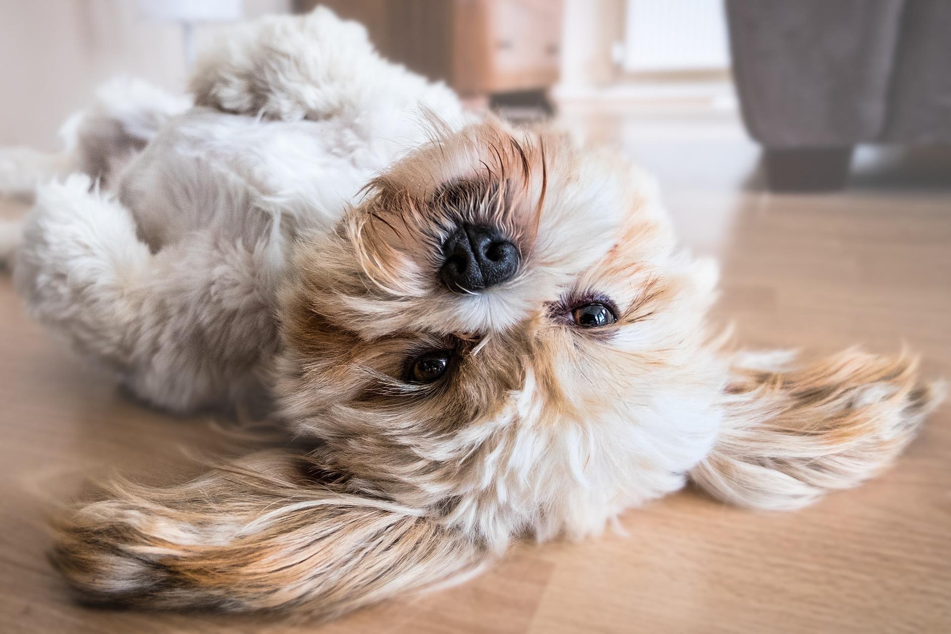 hund-fell
