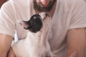 Hund-Mensch-Freundschaft