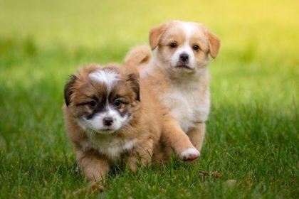 hunde,welpen