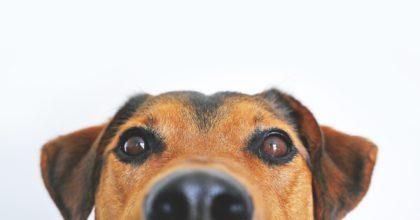hund-intelligent