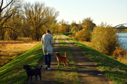 Hund spaziergang