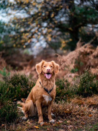 Hunde im Herbst