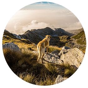 Gesunder Hund in der Natur