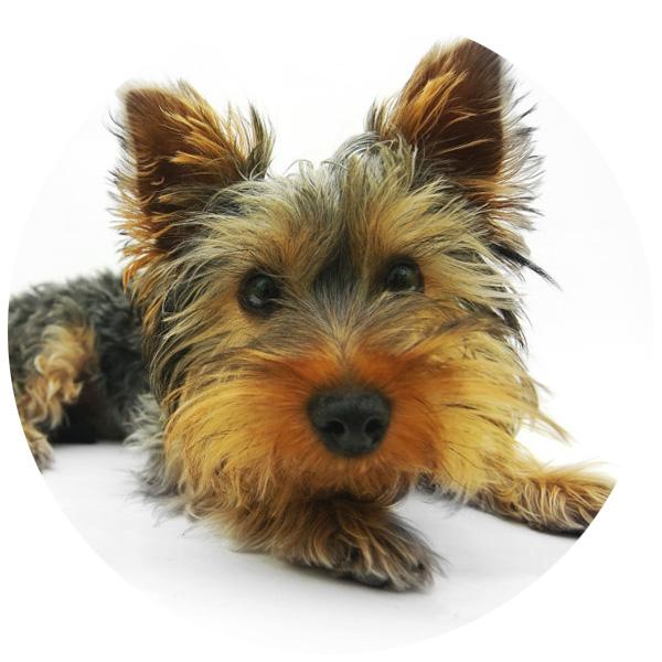 hund dog fit anwendung