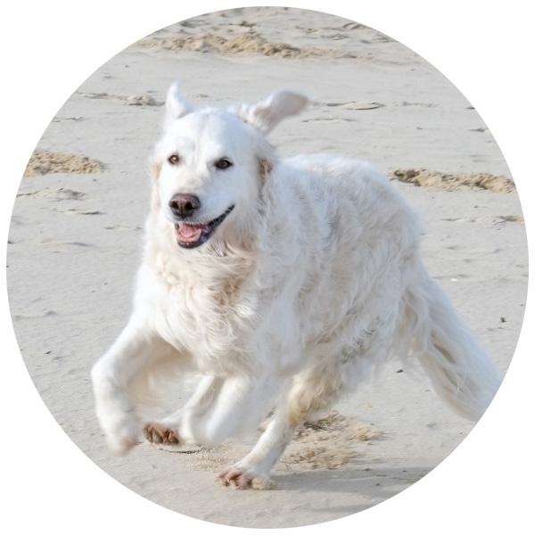 hund strand kniescheibe