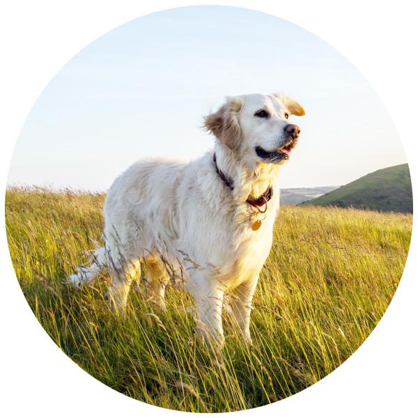hund natur spondylose