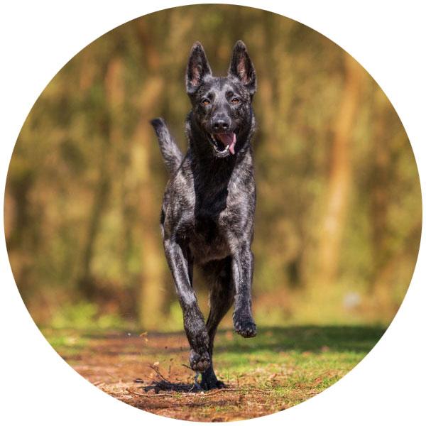 hund glucosamin