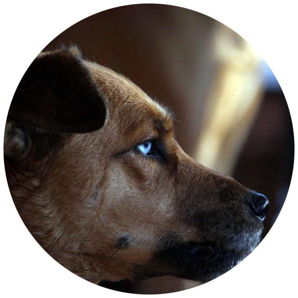 hund hyaluronsäure