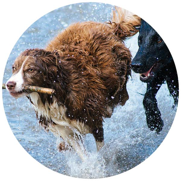 DOG FIT by PreThis Hunde