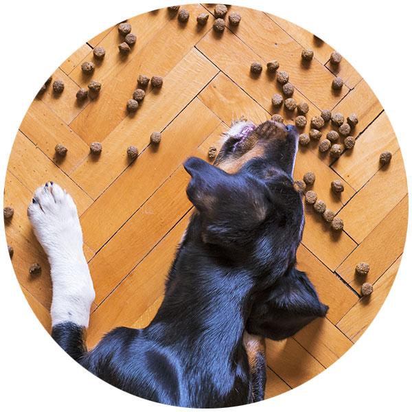 Hund Futter