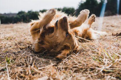 hund-in-der-sonne