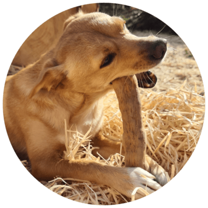 Hund Kauholz Knochen Kaffeebaum